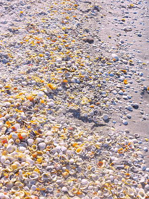 Photograph - Seashells In Sanibel Island, Florida by Monique's Fine Art