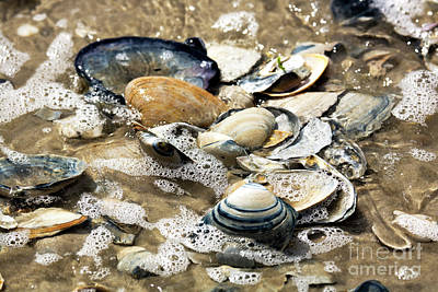 Photograph - Seashells In The Ocean by John Rizzuto