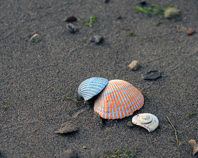 Photograph - Seashells In The Sand by Angela Murdock