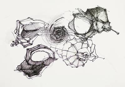 Seashell Design Drawing - Seashells Ink Drawing by Dan Comaniciu