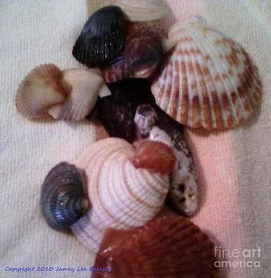 Seashells Art Print by Jamey Balester