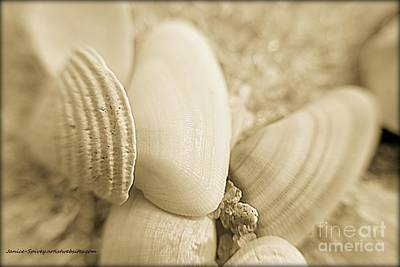 Photograph - Seashells by Janice Spivey