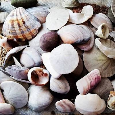 Photograph - Seashells by John Hembree