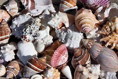 Photograph - Seashells by Kristin Elmquist