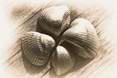 Seashells Original by Lali Kacharava