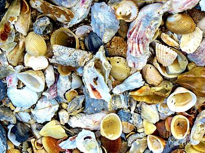 Photograph - Seashells Ll by Tim Townsend