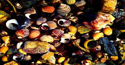 Photograph - Seashells by Mike Breau