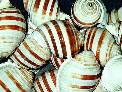 Photograph - Seashells On Display - Florida Keys by Merton Allen