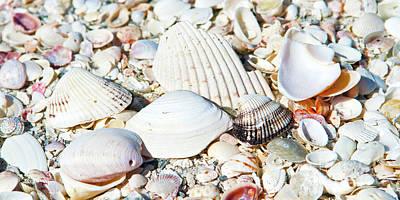 Seashells On The Beach On Vacation Art Print