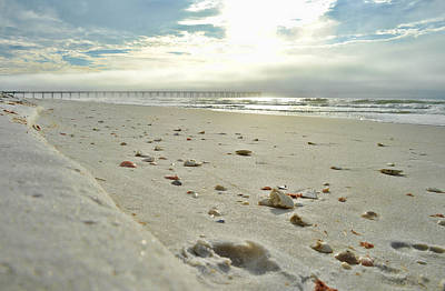 Photograph - Seashells On The Seashore by Renee Hardison