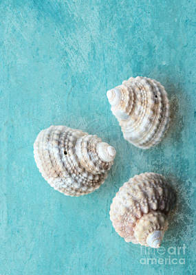 Digital Touch Photograph - Seashells On Turquoise by Carol Groenen