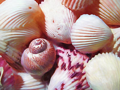 Photograph - Seashells Painterly by Mary Bedy
