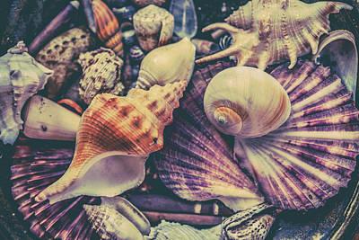 Seashells Seashells Art Print by Az Jackson