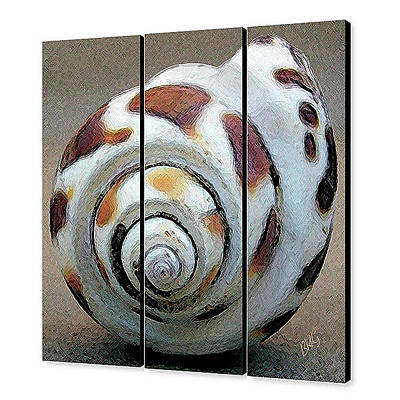 Seashells Spectacular No 2 - Triptych Original