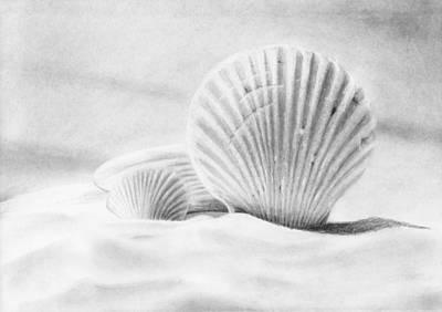 Drawing - Seashells Still Life by Nolan Clark