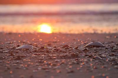Seashells Suns Reflection Art Print