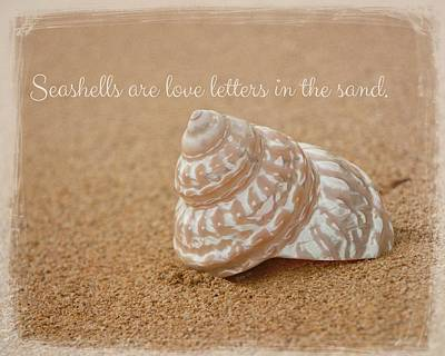 Photograph - Seashells by Teresa Wilson