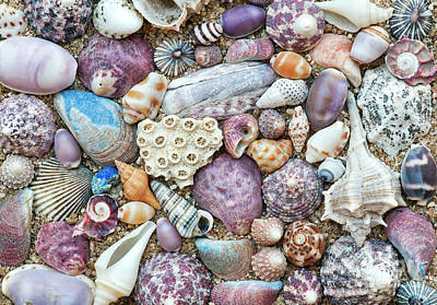 Photograph - Seashells by Tim Gainey