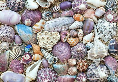 Photograph - Seashells by Tim Gainey