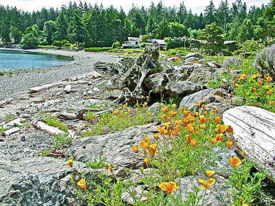 Photograph - Seashore Along Turn Point Road On San Juan Island, Washington  by Ruth Hager