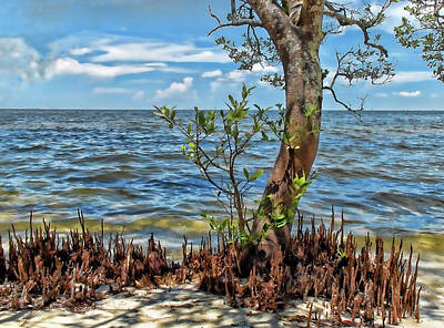 Photograph - Seashore Mangrove by HH Photography of Florida