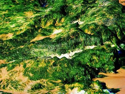 Photograph - Seashore Moss by Jennifer Baulch