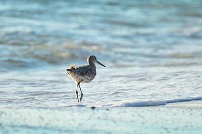 Photograph - Seaside Adventuring by Jai Johnson