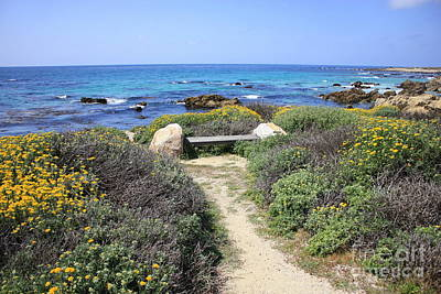 Photograph - Seaside Bench by Carol Groenen