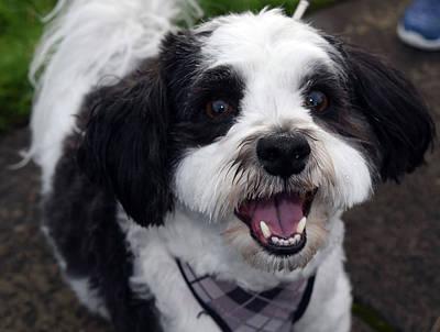 Photograph - Seaside Charlie - Happy Dog by Michele Avanti