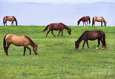 Paso Fino Photograph - Seaside Grazing by Thomas R Fletcher