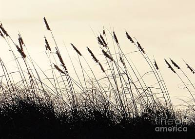 Seaside Oats Art Print by Joy Hardee