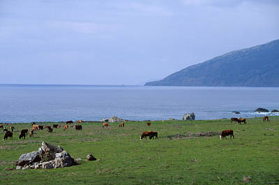 50 Cattle Grazing Photograph - Seaside Pasture by Soli Deo Gloria Wilderness And Wildlife Photography