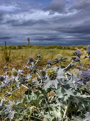 Photograph - Seaside Thistles by Isabella F Abbie Shores