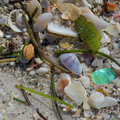 Photograph - Seaside Treasures 2 by Susan Molnar