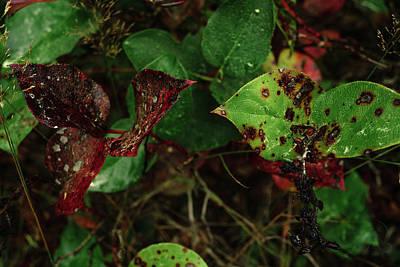 Photograph - Season Color by Gene Garnace