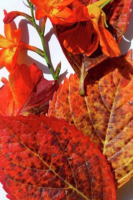 Photograph - Seasonal Shades by Aidan Moran