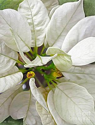 Photograph - Seasonal White Poinsettia by Nina Silver