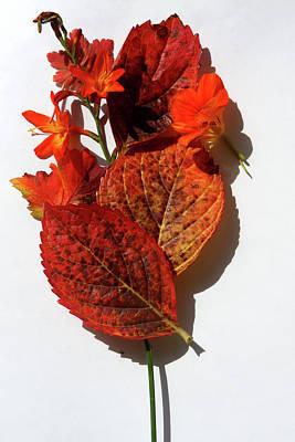 Photograph - Autumn Colour  by Aidan Moran