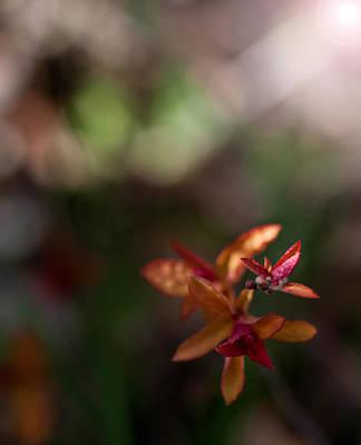 Photograph - Seasons Beginning by Cherie Duran