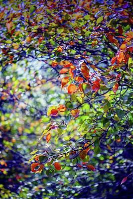 Chaos Maze Photograph - Seasons Change by Az Jackson