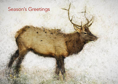 Photograph - Season's Greetings Elk Card by Belinda Greb