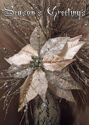 Photograph - Season's Greetings Poinsettia by Jodie Marie Anne Richardson Traugott          aka jm-ART