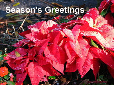 Photograph - Season's Greetings by T Guy Spencer