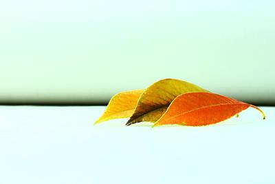 Photograph - Seasons by Mark  Ross