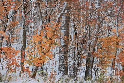 Photograph - Seasons Overlapping by Benanne Stiens
