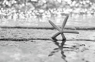 Photograph - Seastar Seafoam by Laura Fasulo