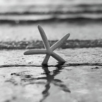Photograph - Summer Seastar Square Black And White by Laura Fasulo