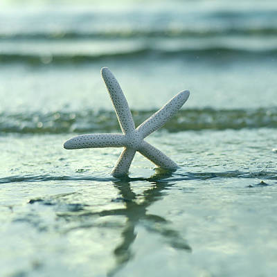 Photograph - Summer Seastar Square by Laura Fasulo