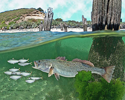 Seatrout Attack Print by Alex Suescun
