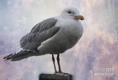 Photograph - Seattle Gull by Victoria Harrington